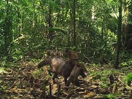 exclusive jungle puppies captured on film for the first time