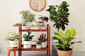 10 stunning plants that will add life to your home canadian living