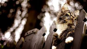 halloween pet background download wallpaper 1920x1080 cat fence flashing climbing full