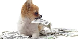 tompor dog chewed up your cash what to do