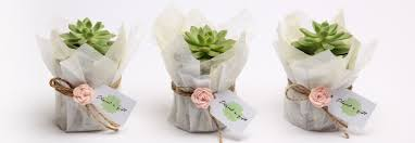 plant a gift corporate gifts ideas linkedin