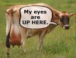 Funny Cow Memes - best cow memes dairy moos