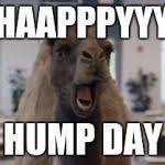 Hump Day Camel Meme - hump day camel meme generator imgflip