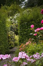 Flowering Privacy Shrubs - 41 incredible garden hedge ideas for your yard photos