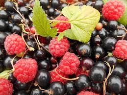 why real blackcurrants not currants should be the next