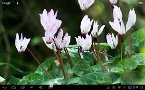 google images flower real flowers live wallpaper android apps on google play