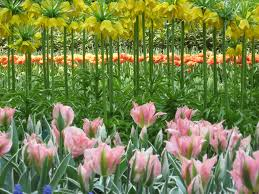 keukenhof flower gardens keukenhof gardens travel attractions facts u0026 history