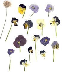 pressed flowers pressed flower artistry warren library
