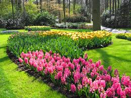 sacramento florist flowers to start with for a novice gardener folsom and