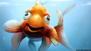 images of funny fish wallpaper hd sc