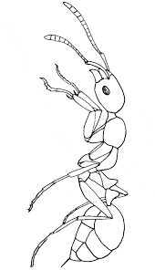 fire ant coloring animals town animals color sheet fire