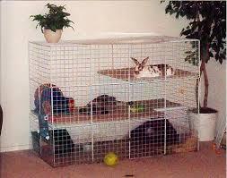 Rabbit Hutch Set Up Indoor Cages Rabbits Indoors