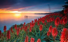sunset over exotic flowers wallpaper nature wallpapers 35328
