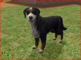 sims 3 australian shepherd mod the sims bernese mountain dog u0026 maremma