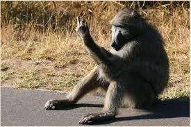 Baboon Meme - baboon thread