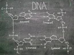 dna and rna ck 12 foundation