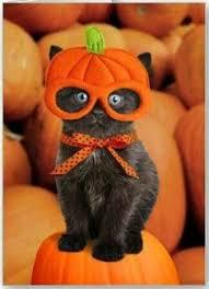 Kitten Halloween Costume Kitten Costumes Halloween