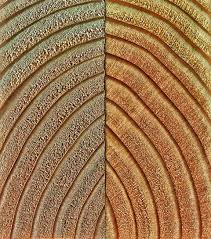 Wood Carving Designs Free Download by Free Images Wood Grain Texture Leaf Spiral Pattern Line