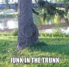 tree puns tree memes
