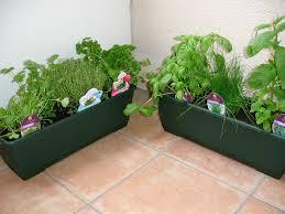 plante aromatique cuisine cuisine deco plante aromatique cuisine deco plante aromatique