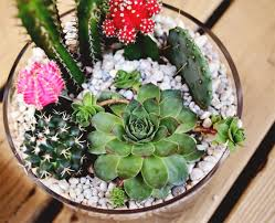 diy projects simple cactus garden ideas home design and