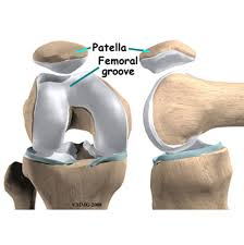 Knee Compartments Anatomy Patella Instability Brisbane Knee And Shoulder Clinic