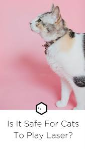 182 best cats images on pinterest animals kitty cats and cat laser pointers pros cons and safety tips