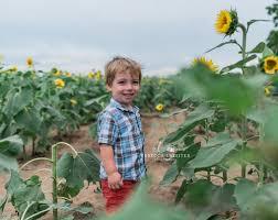 Grinter Sunflower Field Sessions At Grinter Farms Lawrence Ks U2014 Rebecca