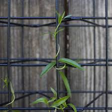 small tendrils intertwining with our black 2 x 2 trellis panel