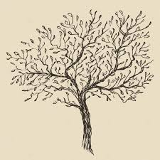 shrub stock vectors royalty free shrub illustrations depositphotos