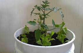 how to make quick and inexpensive self watering pots rodale u0027s