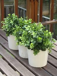 Ikea Plant Ideas by Best 25 Kitchen Window Sill Ideas On Pinterest Window Ledge