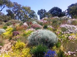 native plants south australia australian native garden u2026 pinteres u2026