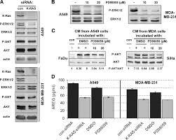 stimulated pi3k akt signaling mediated through ligand or radiation
