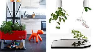 plante cuisine decoration plante pour cuisine fashion designs