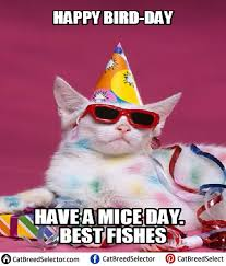 Day After Birthday Meme - happy birthday cat memes cat breed selector