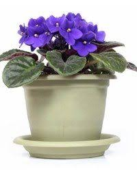 house plants that don t need light what are some indoor plants that don t need any sun quora