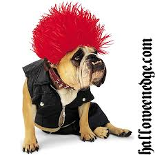 cute dog halloween costumes u2013 halloween edge