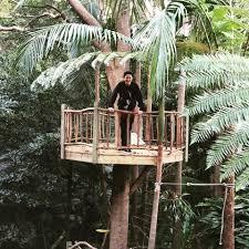 wild rumpus backyard treehouse design