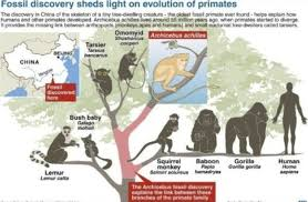 human origins 101 the basics