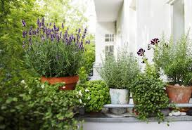 plants and flowers to create a balcony garden sgaravatti eu