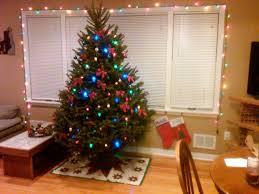 real trees lights decoration delivered mini