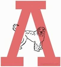 dog breeds a to z breeds that begin with a