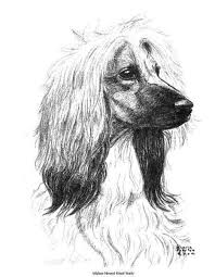 afghan hound judging list 116 best everything i love afghan hounds aussies images on