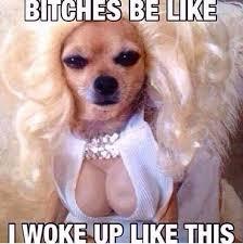 I Woke Up Like This Meme - 22 meme internet bitches be like i woke up like this