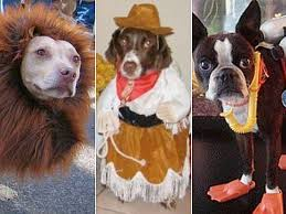 Cute Dog Halloween Costumes 14 Adorable Dogs Halloween Costumes Pictures