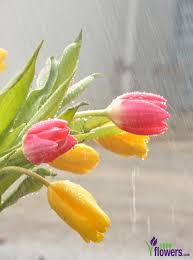 Origination Of Halloween by April Showers Bring May Flowers Origin Petal Talk