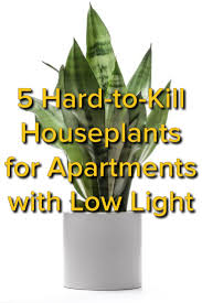 houseplants that need little light cool very low light houseplants by edcbfcbdeebf gardens for