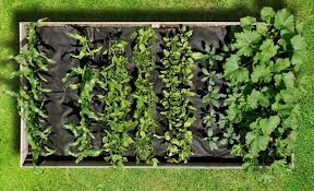 roll out flower garden magic carpets instant edible gardens with roll out seedsheets