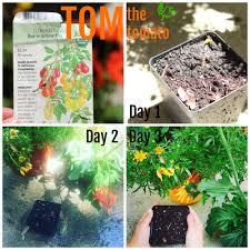 garden ideas for kids start a micro garden